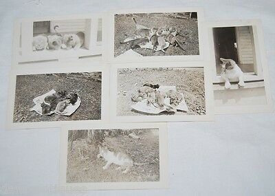 6 vintage snapshot photos of CATS