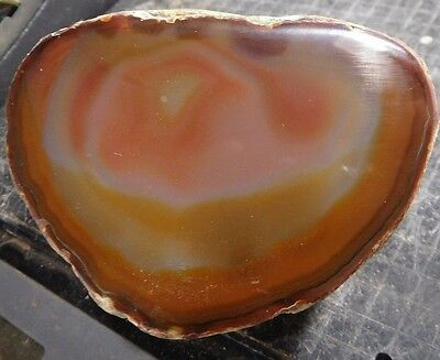 Brazilian Agate-Polished End Cut