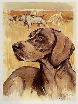 Vintage GERMAN SHORTHAIRED POINTER Print Dog Gallery Wall Art 2181