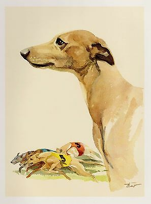 Vintage WHIPPET Art Print Whippet Illustration Gallery Wall Art Home Decor 2186