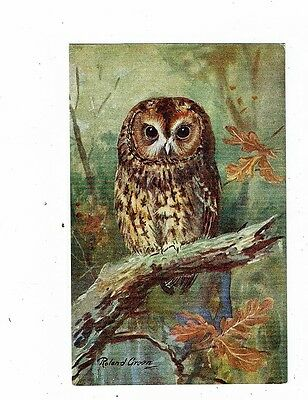Post Cards Birds Art Card By Roland Green A Brown Owl