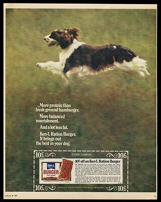 1972 English Springer Spaniel photo Ken-L Ration dog food vintage print ad