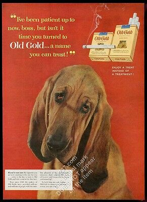 1954 bloodhound photo Old Gold cigarettes vintage print ad