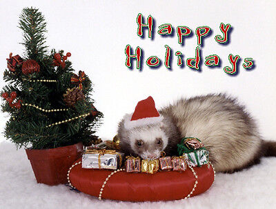 20 Pet Christmas Cards:Ferret Xmas