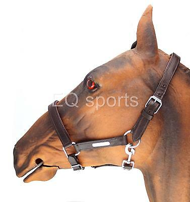FREE P&P Beautiful Padded Leather Headcollar silver fittings Brown Full