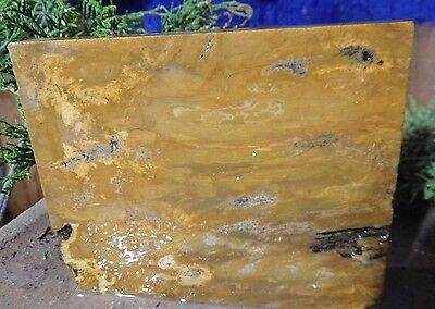 Petrified wood-Unpolished Slab-Great Trivet or for Your Lapidary shop