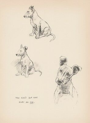 1930s Vintage BULL TERRIER Print Dog Art Antique Puppy Print 2207
