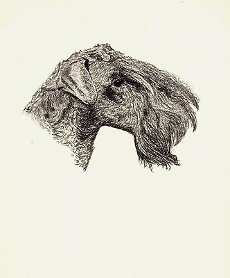 1935 Antique KERRY BLUE Terrier Print Gallery Wall Gift for Dog Lover CFW 2225