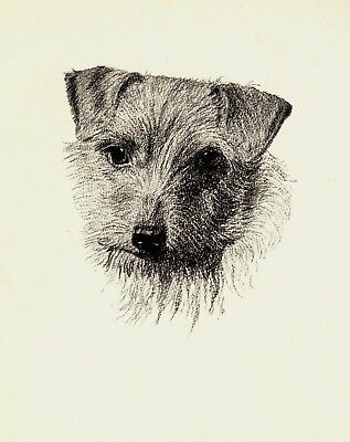 1935 Antique NORWICH TERRIER Print Gallery Wall Gift for Dog Lover CFW 2229