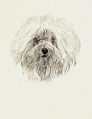 1935 Antique MALTESE DOG Print Vintage Dog Pet Print CFW 2240