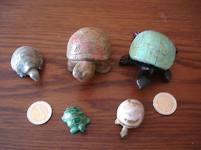5  Tortue Lot 5 Belle Tortue  Collection Pierre