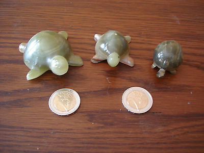3  Tortue Lot 3 Belle Tortue  Collection Pierre