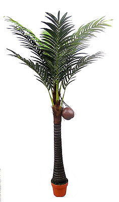 Artificial Coconut Palm Tree with Fruits ~ Indoor Tree ~ Premium Quality