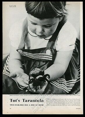 1956 little girl playing with tarantula photo vintage print article