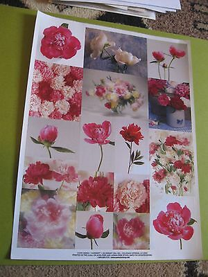 Current real floral flowers large sticker sheet   (free ship $20 min)