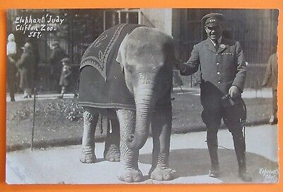 HEPWORTH RP Postcard c.1920 ELEPHANT JUDY CLIFTON ZOO BRISTOL