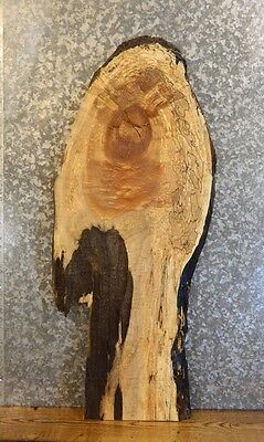 Very Rustic Live Edge Spalted Maple Coffee/Console Table Top Slab 40174
