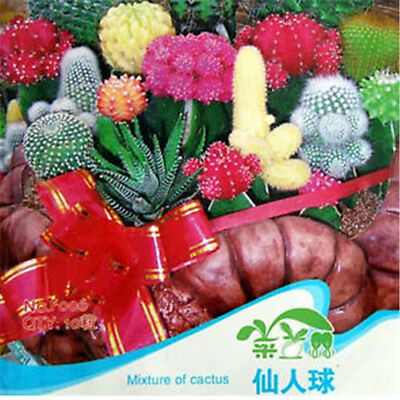 Mixture Of Cactus Flower Colorful Plant Seeds ~1 Bag 10 Seeds~