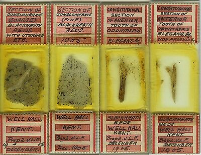 4 1905 Fossil Thin Section Microscope Slides by J.L.F.