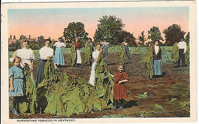 1920's A Family Harvesting Tobacco in KY Kentucky PC