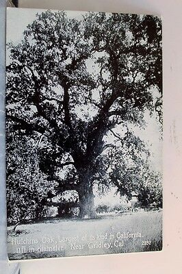 California CA Gridley Hutchins Oak Postcard Old Vintage Card View Standard Post