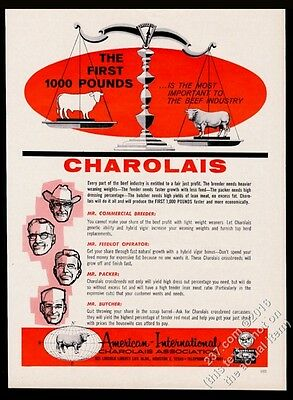 1962 Charolais cattle cow bull on scale illustrated AICA vintage print ad