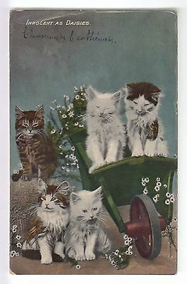 Cpa  Animal Fantaisie -  Chat Cat Katze Innocent As Daisies Brouette 1912 ~B73