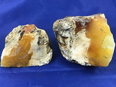 LOT OF 2 Natural Baltic Amber Stones 68GR (47+21) TIGER WHITE color EXC!