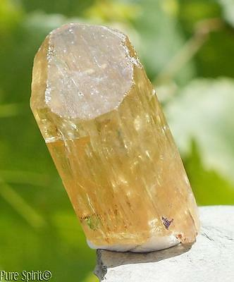 Raw Golden Yellow Apatite Crystal Terminated Point A Grade Natural Stone 14.7g