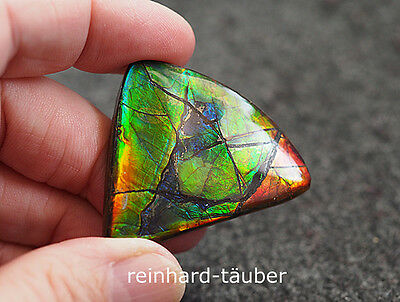 BIG+RAR   GEM  AMMOLITH - AMMOLITE - KORIT - KORITE  92,16ct