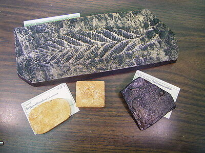 GEOLOGICAL ENTERPRISES Ediacaran Fossil Casts