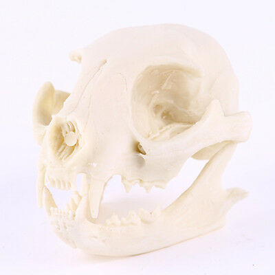 1pc Lucky Cat skull model resin animal skull resin skull model Decoration Hot