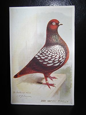 Aids To Amateurs Pigeons No 15 The SnowTippler Postcard From The Feathered World
