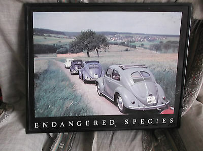 "Large colour picture of VW Split Beetle Convoy, 20"" X 16"" with wood frame VGC"