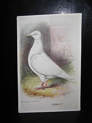 Aids To Amateurs Pigeons No 13 The Cumulet Postcard  Feathered World
