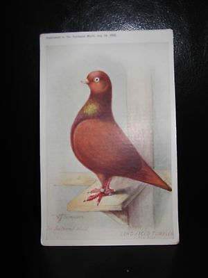 Aids To Amateurs Pigeons No 9 The Long Faced Tumbler Postcard  Feathered World