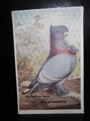Aids To Amateurs Pigeons No 16 Blue Blondinette Postcard  Feathered World
