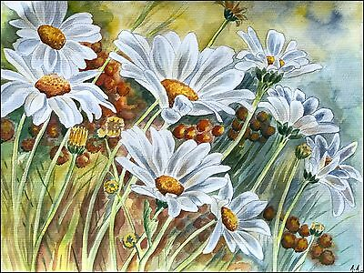 Die Blumen - Kamillen - Original Aquarell - Camomiles Watercolour Flowers