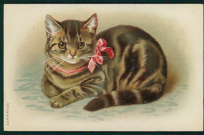 art unsigned Helena Maguire tabby cat with bow original old 1910s Litho postcard