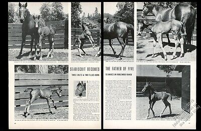 1940 Seabiscuit photo with his 5 horse offspring vintage print article