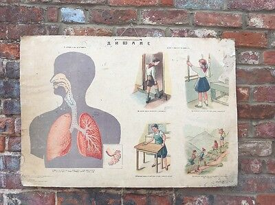 Vintage Human skeletal Muscular School Medical Science Poster Anatomy Teaching