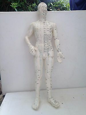 """Fabulous Male Form Accupuncture Meridianal Extrodinary Points 19"""" Model & Base"""