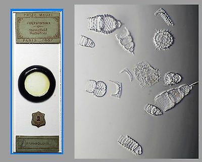 Antique Microscope Slide  ~ Polycystina - Springfield Barbadoes ~ by AC Cole