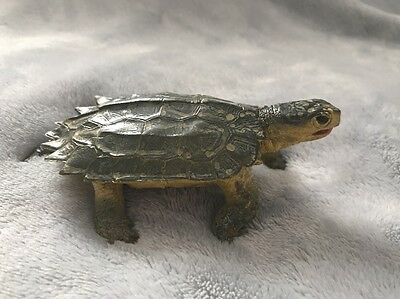 RARE FIND Green Notched Turtle Realistic Toy Reptile Model Replica