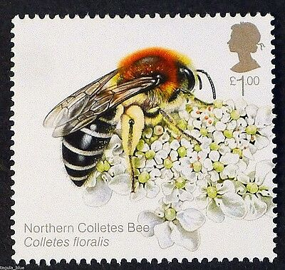 Northern Colletes Bee (Colletes floralis) on 2015 stamp - Unmounted mint