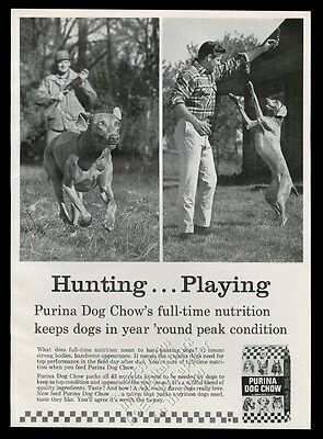 1965 Vizsla or Weimaraner photo Purina Dog Chow food vintage print ad