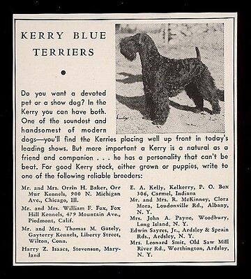 1940 Kerry Blue Terrier photo dog breeders list vintage print ad