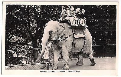 Dudley Zoo Indian Elephant Meena Children Riding rp Tuck Postcard c1960