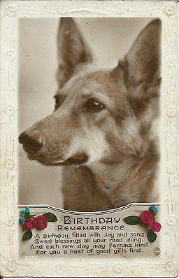 German Shepherd Dog Real Photographic Dog Postcard Alsatian
