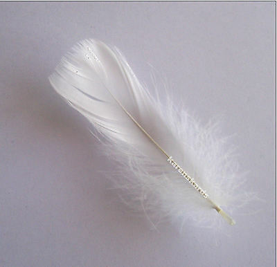 White Feathers x 100 Goose Coquille Feathers,Ideal for stamping for xmas baubles